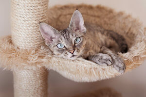 Katze liegt im Bett in der Kratzsäule