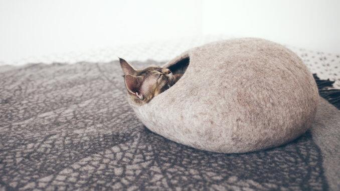 Katze liegt in ihrer Katzenhöhle