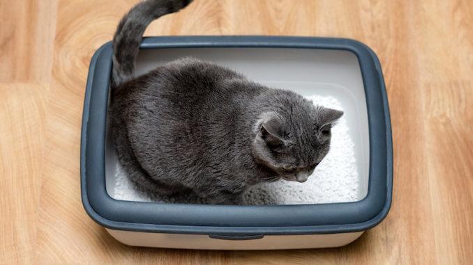 Katze macht ins Katzenklo