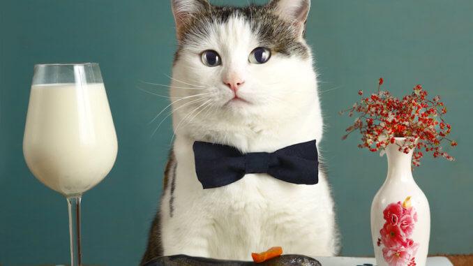 Katze mit rohem Fisch und einem Glas Milch am Tisch