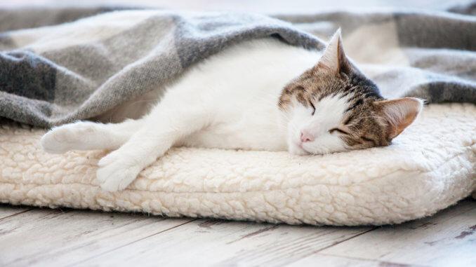 Katze schläft auf Katzenkissen zugedeckt mit einer Decke