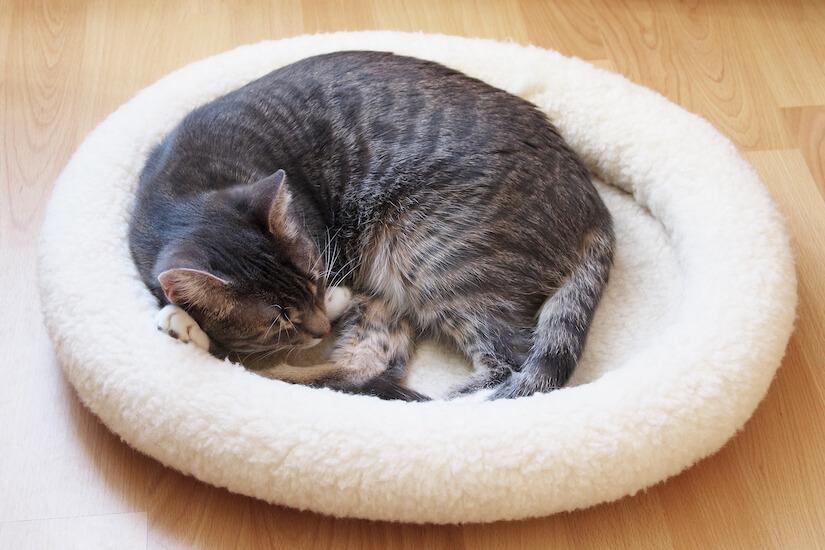 Katze schläft im Katzenbett Katzensofa