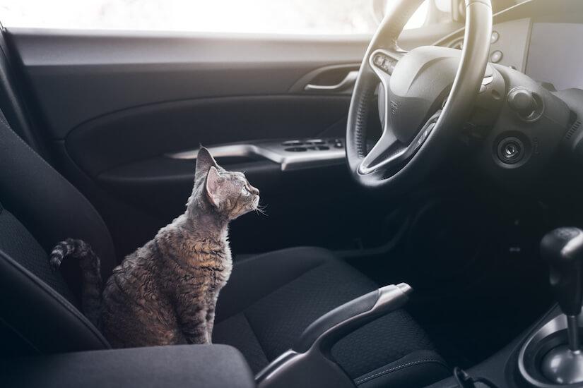 Katze sitzt auf dem Fahrersitz im Auto