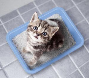 Katze sitzt im Katzenklo und guckt nach oben