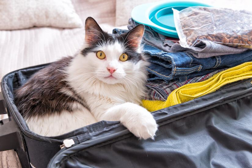 Katze sitzt im gepackten Koffer und will mit in den Urlaub