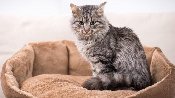 Katze sitzt in Ihrem Katzenbett
