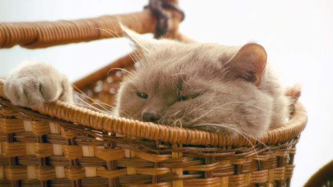Katze sitzt in geflochtenem Katzenkorb aus Weide