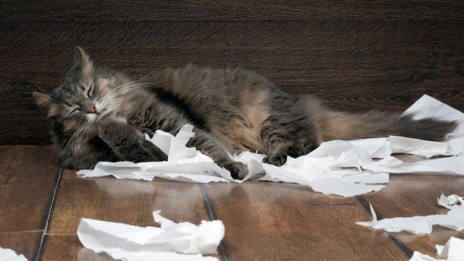 Katze spielt mit Klopapier