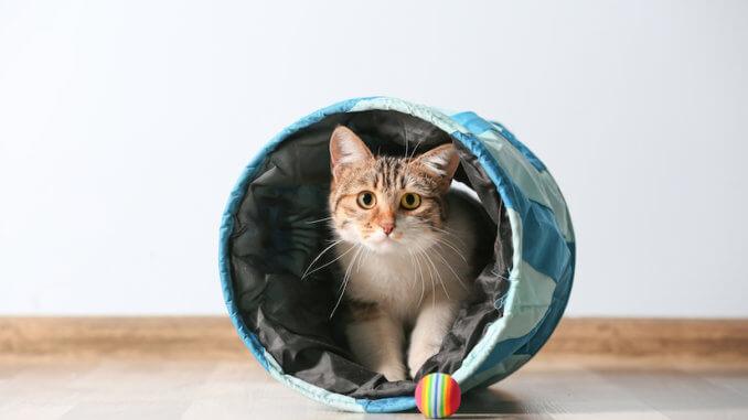 Katze spielt mit dem Katzentunnel