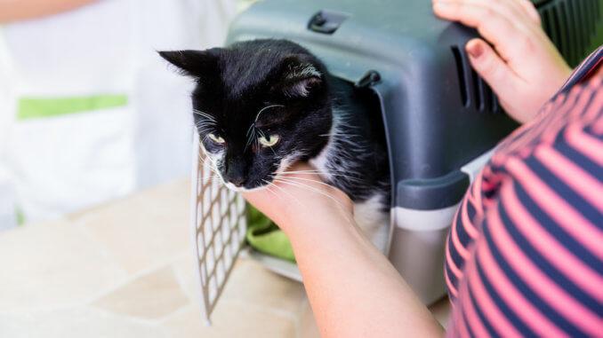 Katze wird aus der Transportbox herausgeholt