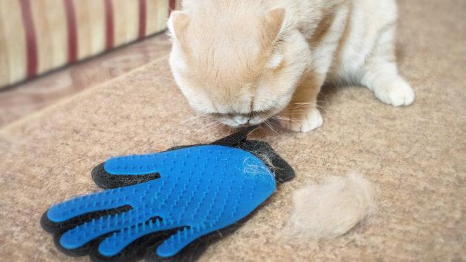 Katze wurde mit Bürstenhandschuh gebürstet