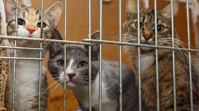 Katzen in einem Käfig im Tierheim