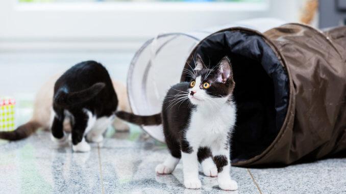 Katzen spielen in ihrem Katzentunnel