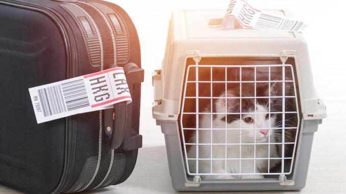 Katze in der Katzentransportbox in das Flugzeug