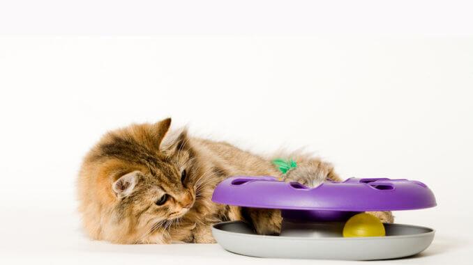 Kleine Katze spielt mit Intelligenzspielzeug