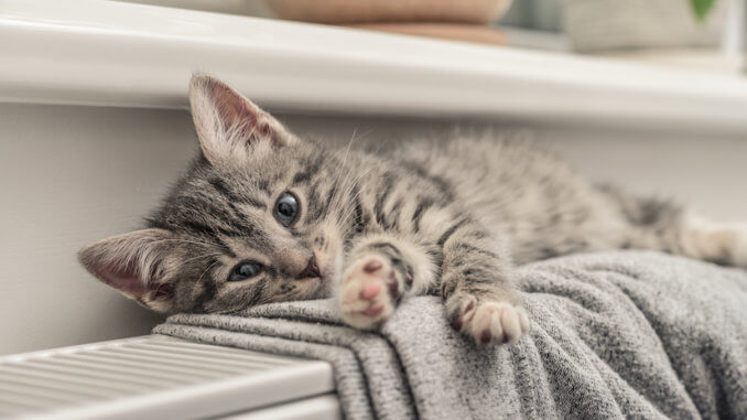 Kleine graue Katze liegt auf der Heizung