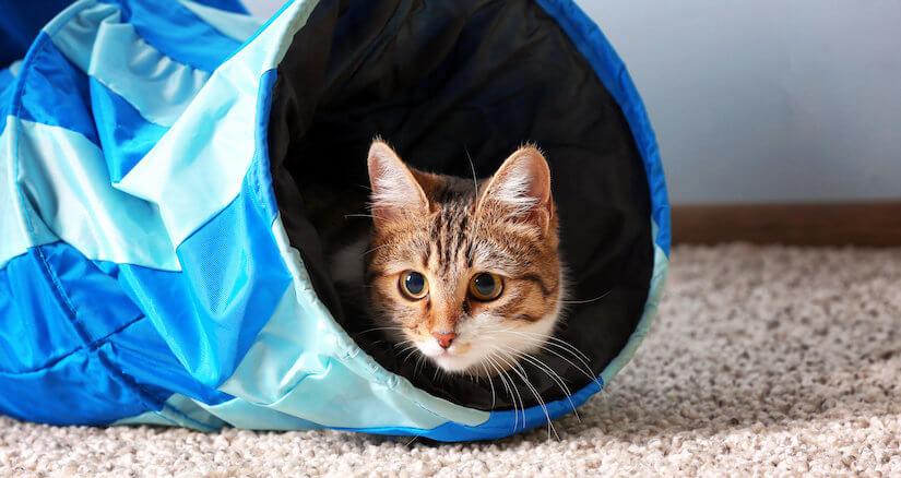 Kleines Kätzchen in einem blauen Katzentunnel