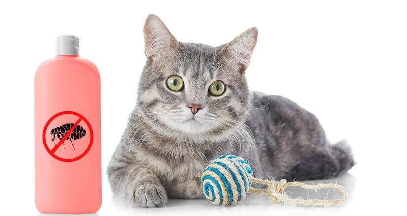 Kleines Kitten mit einem Flohmittel