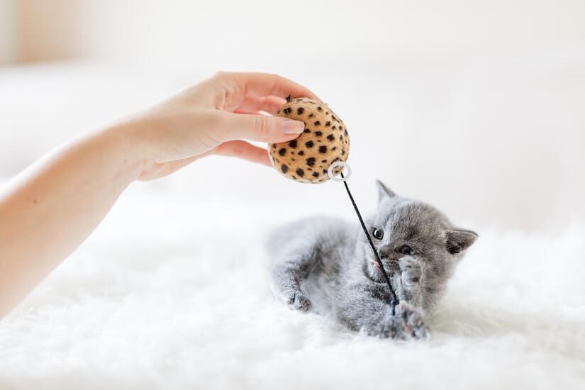 Kleines Kitten spielt mit Ball