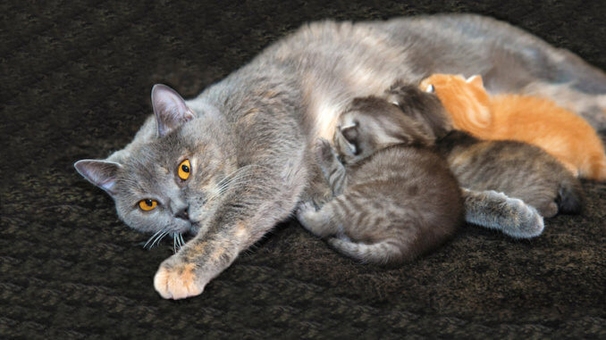 Mutter Katze füttert ihre kleinen Kitten