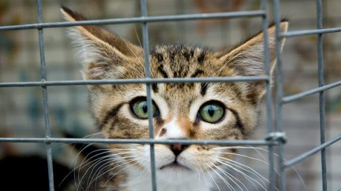 Süße Katze in einem Katzenkäfig im Tierheim