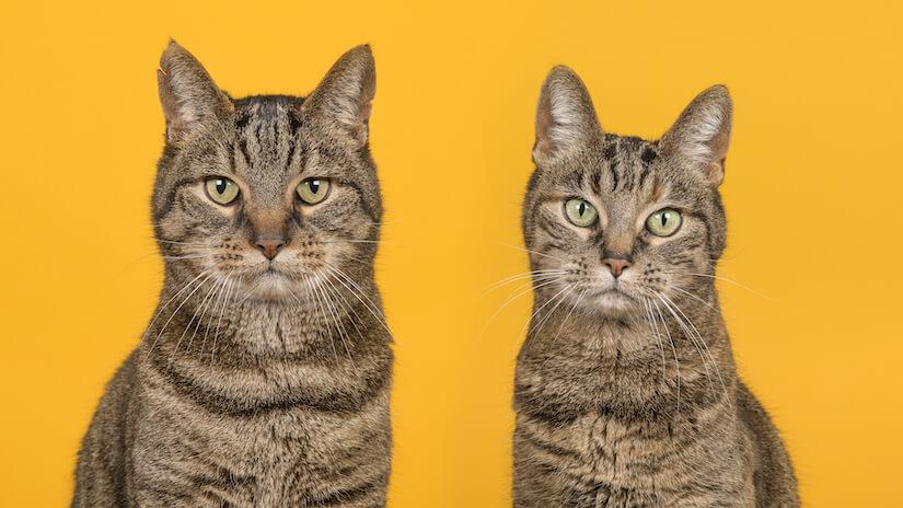 Tabby Katze und Kater sitzen nebeneinander