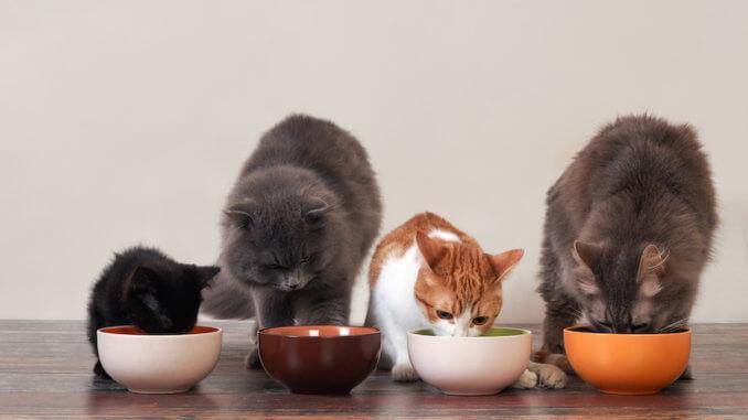 Vier Katzen fressen Katzenfutter aus Katzennäpfen