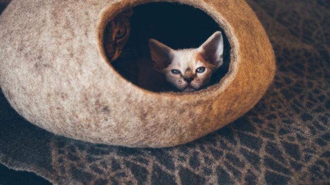 Zwei Katzen in einer Katzenhöhle