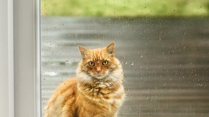 Auch in eine Glastür lässt sich eine Katzenklappe einbauen