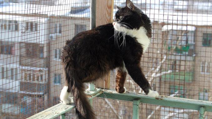 Balkon ist mit einem Katzengitter gesichert