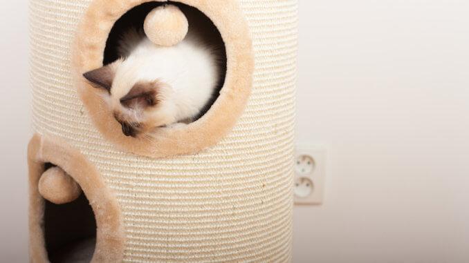 Birma Katze in einem Katzenturm