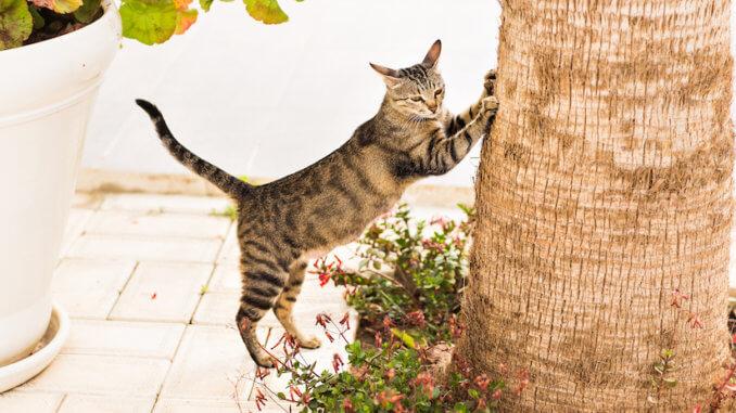 Ein echter Naturkratzbaum