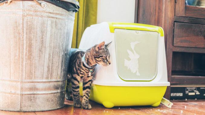 Ein selbstreinigendes Katzenklo verhindert Gestank und Arbeit