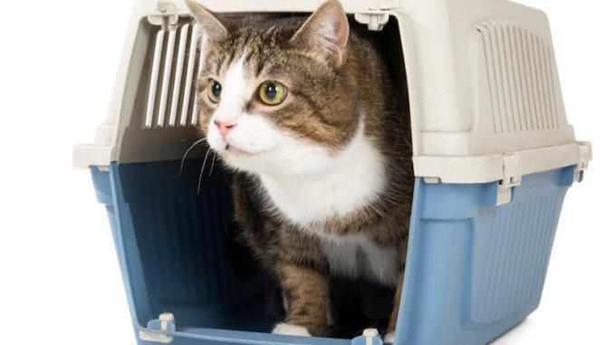 Eine Katze guckt aus ihrer Katzenbox heraus