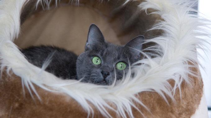 Eine Katze liegt in ihrer Katzen Kuschelhöhle