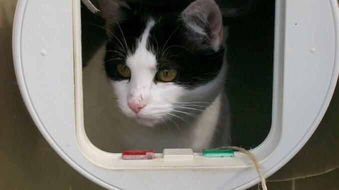 Eine Katzenklappe mit Chip lässt nur die eigene Katze ins Haus