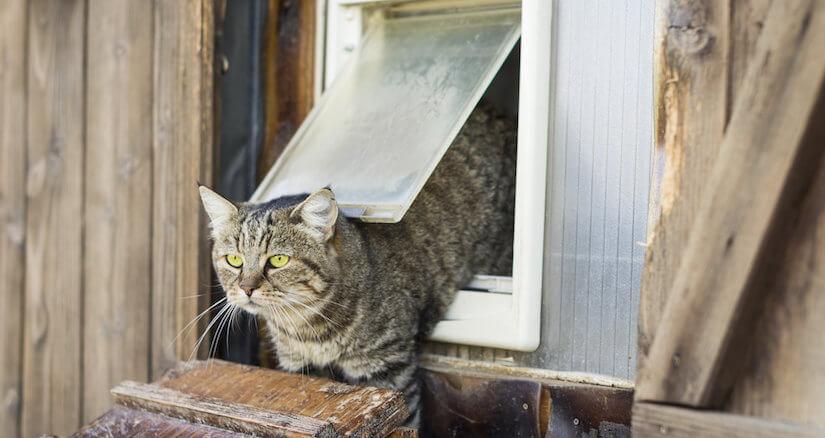 Eine Katzenklappe sollte gut isoliert sein