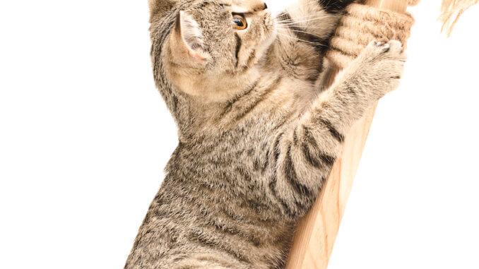 Eine Kratzecke für Katzen