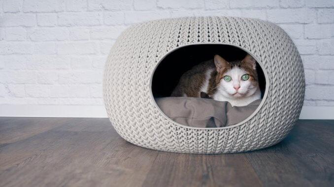 Eine Kuschelhöhle Katze