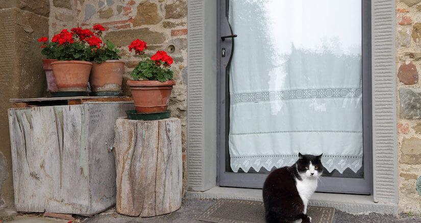 Glastür ohne Katzenklappe - Auch hier kann man relativ einfach eine Katzenklappe einbauen