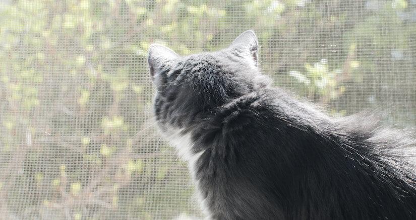 Graue Katze guckt durch ein Katzennetz nach draußen