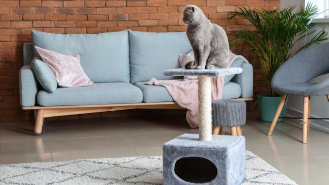 Graue Katze sitzt auf ihrem Kratzbaum mit Kratztonne