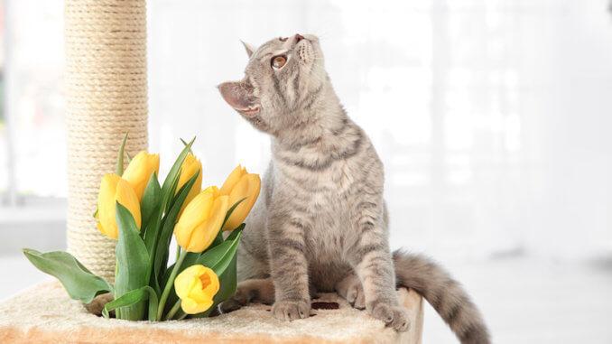 Kätzchen im Kratzbaum Deckenspanner