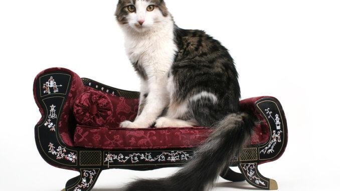 Katze auf ihrem Katzensofa
