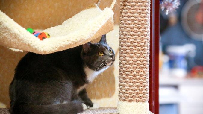 Katze im Kratzbaum Wandmontage