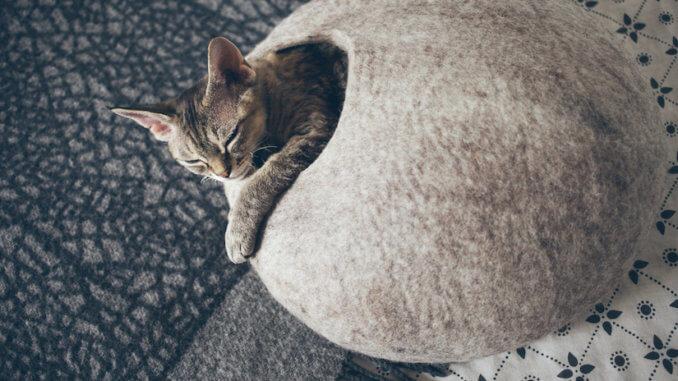 Katze in einer Filz Kuschelhöhle