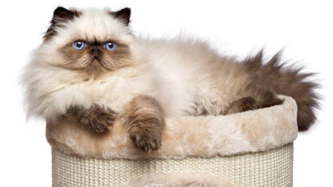 Katze liegt auf ihrem Katzenturm