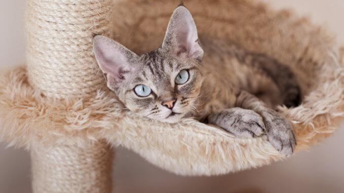 Katze liegt im Bett am Kratzstamm