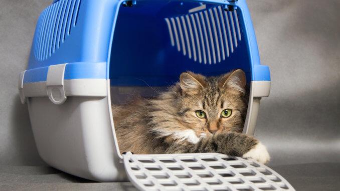 Katze liegt in Katzenbox mit offener Klappe