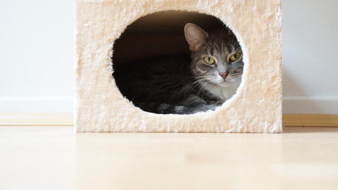 Katze liegt in ihrer Kratztonne